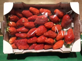 Fraise gariguette extra 800g